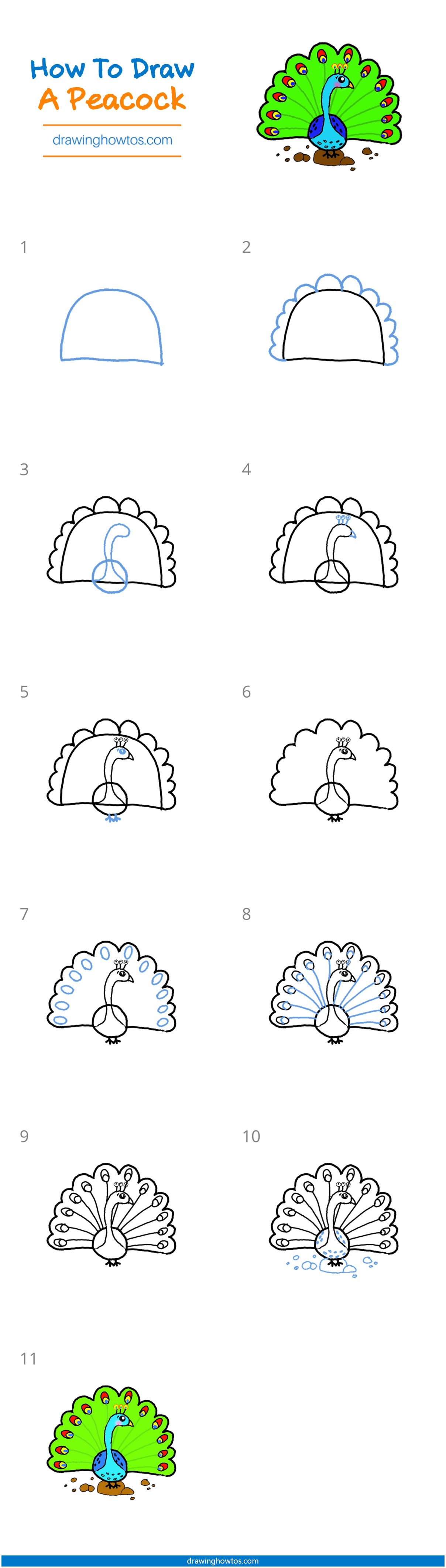 How to Draw a Peacock - Step by Step Easy Drawing Guides ...