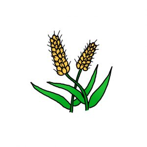 How to Draw Wheat