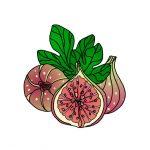 How to Draw Figs
