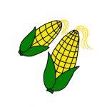 How to Draw Corn Crobs